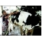 Ramilaben s dairy farm Gujarat woman milking millions in dairy den